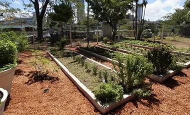 Horta Urbanas e benefícios