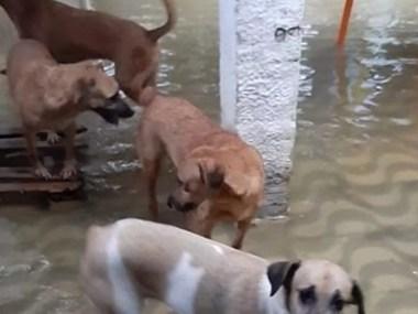 Abrigo de animais pede socorro após alagamentos em Salvador