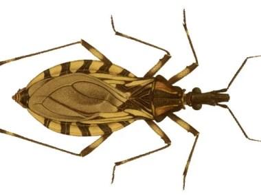 Estão abertas as inscrições para o Seminário Estadual de Doenças de Chagas