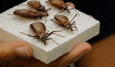 Remédio para Alzheimer também tem efeito contra doença de Chagas