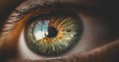 Cientistas desvendam a função de um fator de crescimento que protege a visão