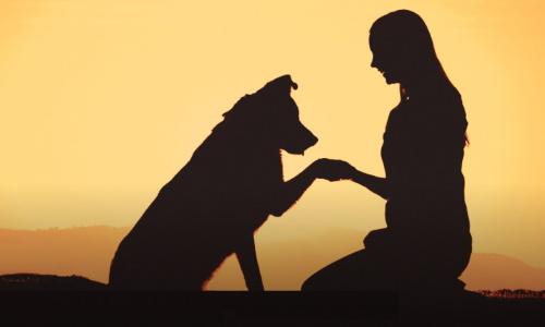 Direito de visita a animal de estimação após separação