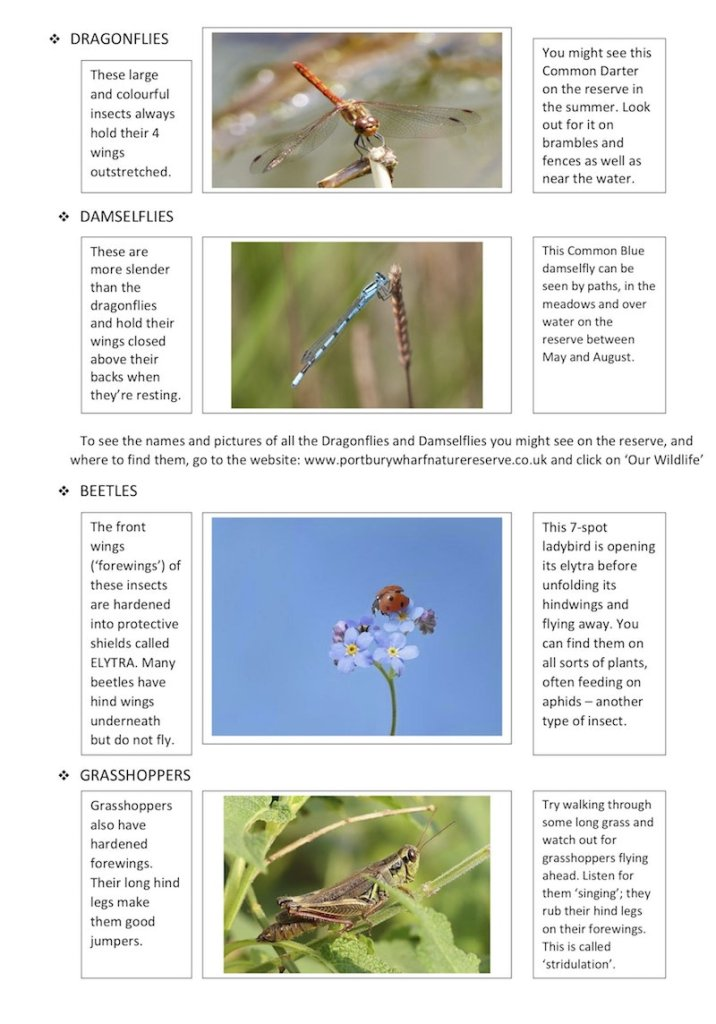 Insects worksheet 2