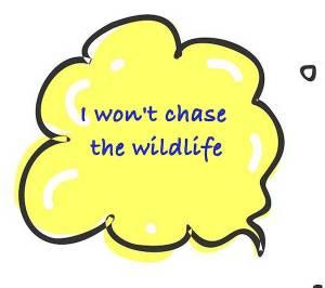 Dog Rangers won't chase the wildlife
