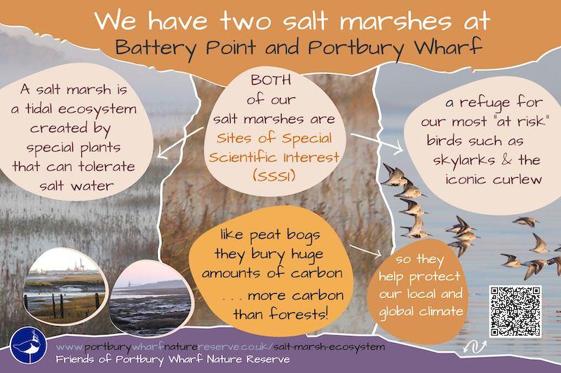 Our salt marsh ecosystems