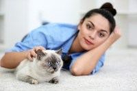 Best Carpet Cleaner To Remove Cat Urine   Upcomingcarshq.com