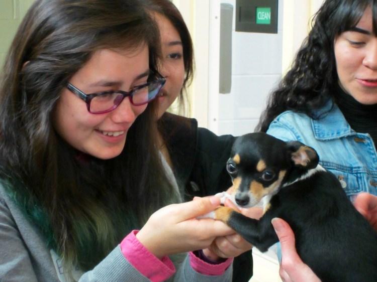 Oregon Humane Society Career Day 2016