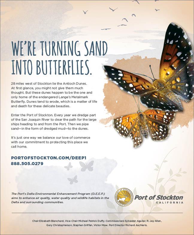 Sand-Into-Butterflies