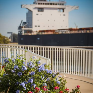 Flowers and ship