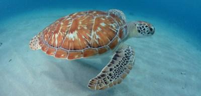 Green-turtle-1920x920-2