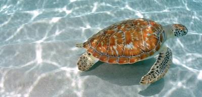 Green-turtle-1920x920