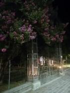 foto 1 rosetta
