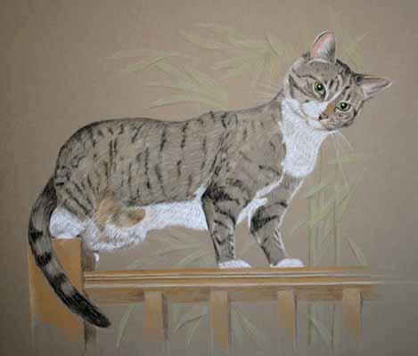 Full body Cat Portraits