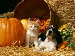 Cat-Dog-Pumpkin