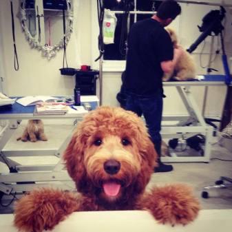 Posh Pups grooming