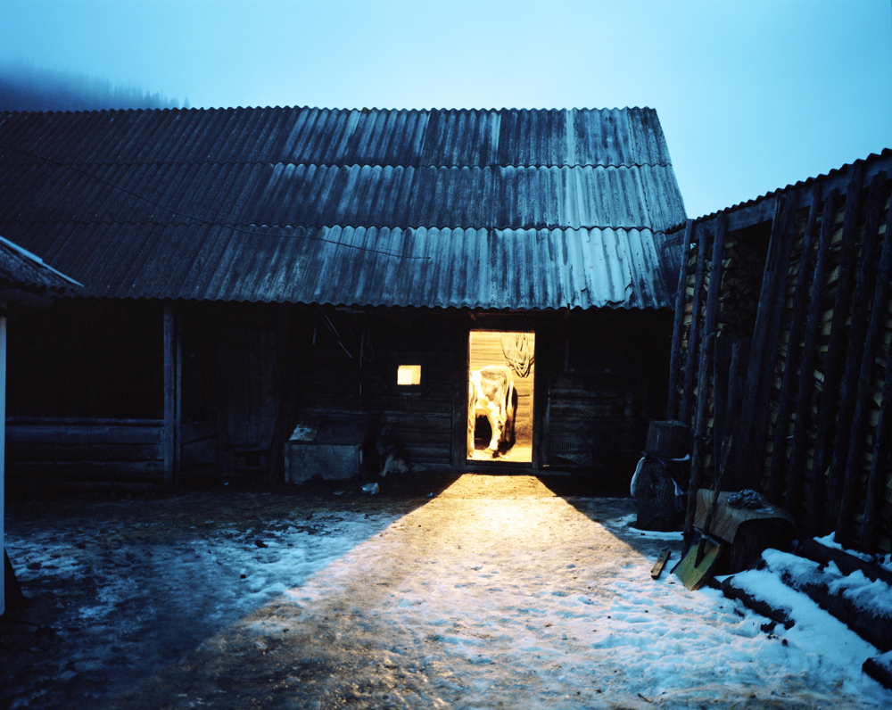 Ukraine / Karpatskie village / Cows in a shed in the winter evening / 01.2010