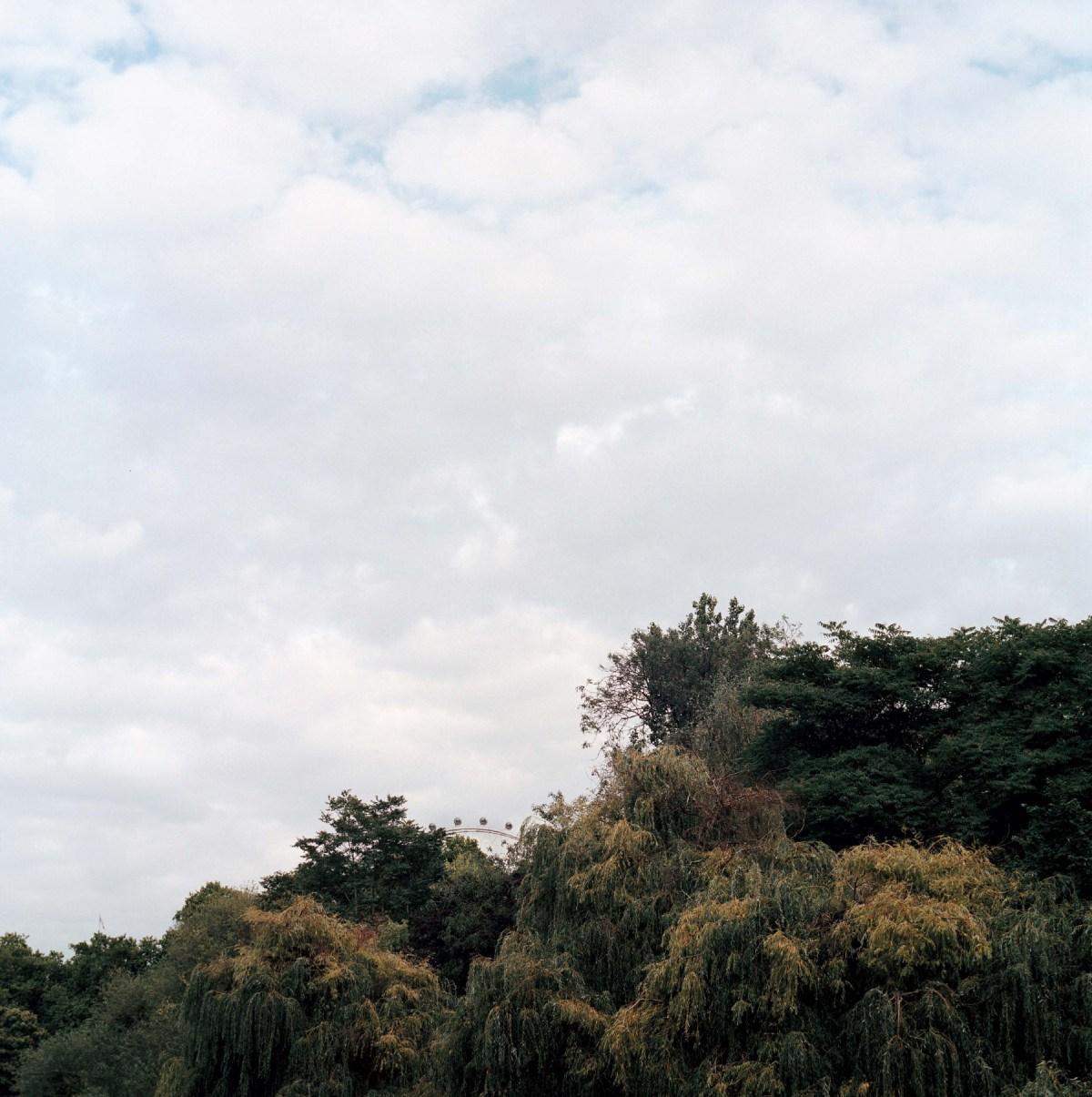 01-GabrieleDiStefano-Wherethetreesgrow copy