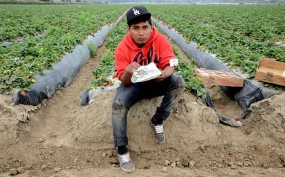 lunch time strawberry fields Oxnard CA