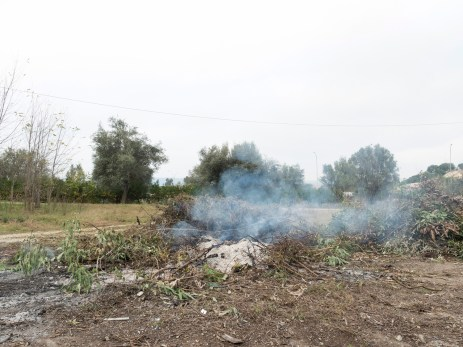 Italy, Calabria, Rosarno 2015. A blaze of branches and rubbish in the countryside of Rosarno