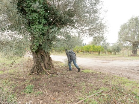Italy, Calabria, Rosano. 2015. An immigrant hides in a field of olives and oranges.