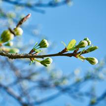 Spring Wood Element