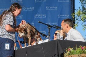 Quasi Modo At Judges Desk Winner of 2015 World's Ugliest Dog Contest