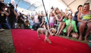 Worlds Ugliest Dog Contest Red Carpet Walk
