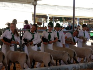 fair10sheepshow1