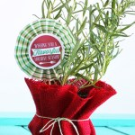 Potted Herb Gift Idea