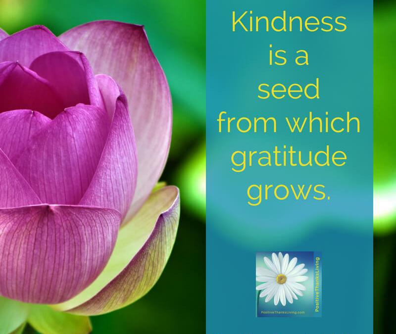 Kindess: A seed to grow gratitude.