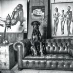 posse,rotterdam,katendrecht,helmut newton,photography,restaurant