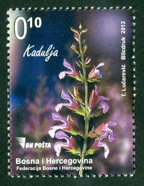Flora – Kadulja