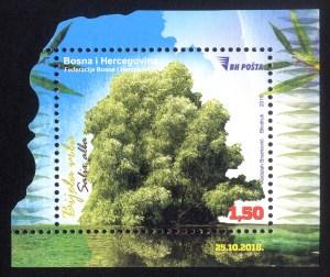 Bijela Vrba (Salix Alba)