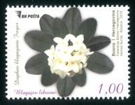 Blagajev Likovac (Daphne Blagayana Freyer)