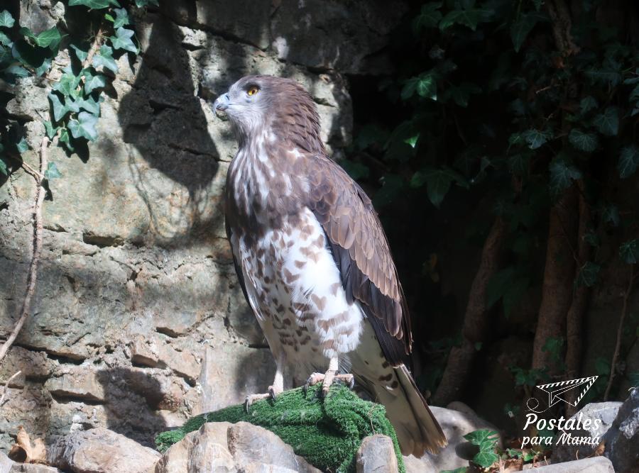 Águila Eco Museo Aínsa - Postales para Mamá