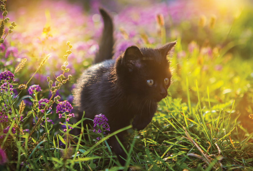 Cute Dachshund Wallpaper Black Kitten In A Flowering Meadow Dogs And Cats