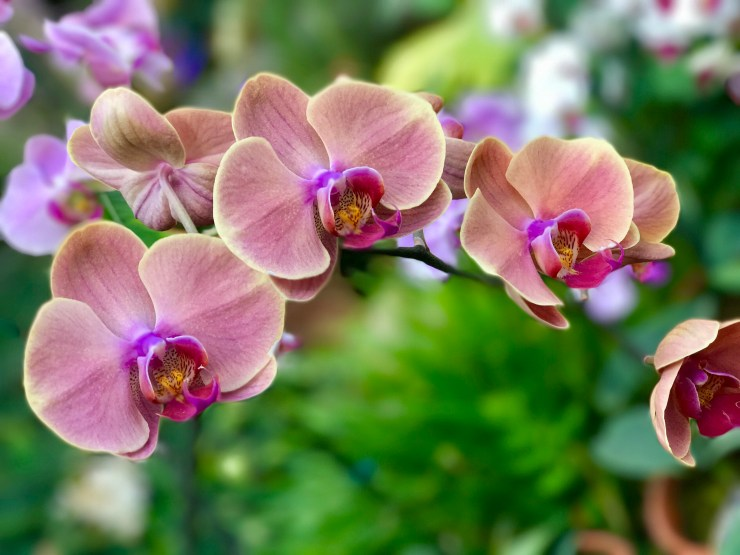 There's nothing like seeing bright tropical plants to warm up a cold winter day. This is one of many beautiful orchids at Lauritzen Gardens in Omaha, Nebraska.