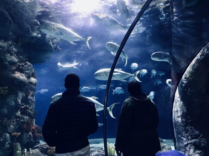 Aquarium, Henry Doorly Zoo, Omaha, Nebraska