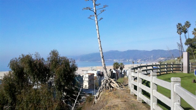 The beach in the heart of Santa Monica. - Nicole Travels: Los Angeles
