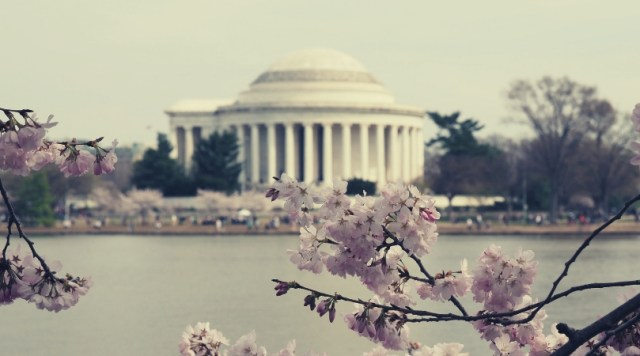 The Jefferson Memorial is Framed by the Cherry Blossoms in Washington, DC