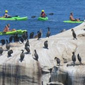 best free things to do in San Diego