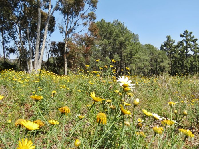 wildflowers on west side of Balboa Park