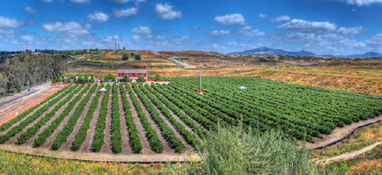'Berry' Fun Blueberry Picking in Temecula
