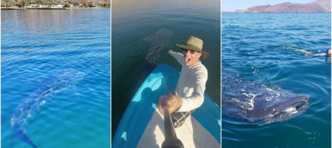 See the Whale Sharks and Marine Life of Baja!