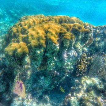 Belize snorkeling