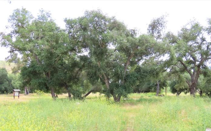 Del Dios Community Park