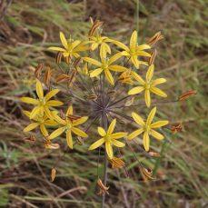 Escondido hikes, wildflowers