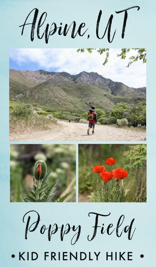 Alpine poppy field