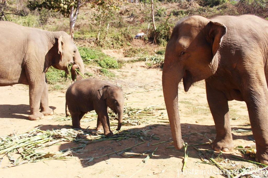 Ver elefantes en Tailandia - Elephant Jungle Sanctuary Chiang Mai