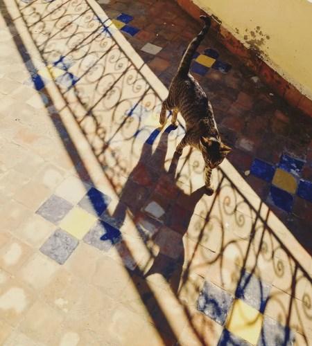 Cat in Fez, Morocco